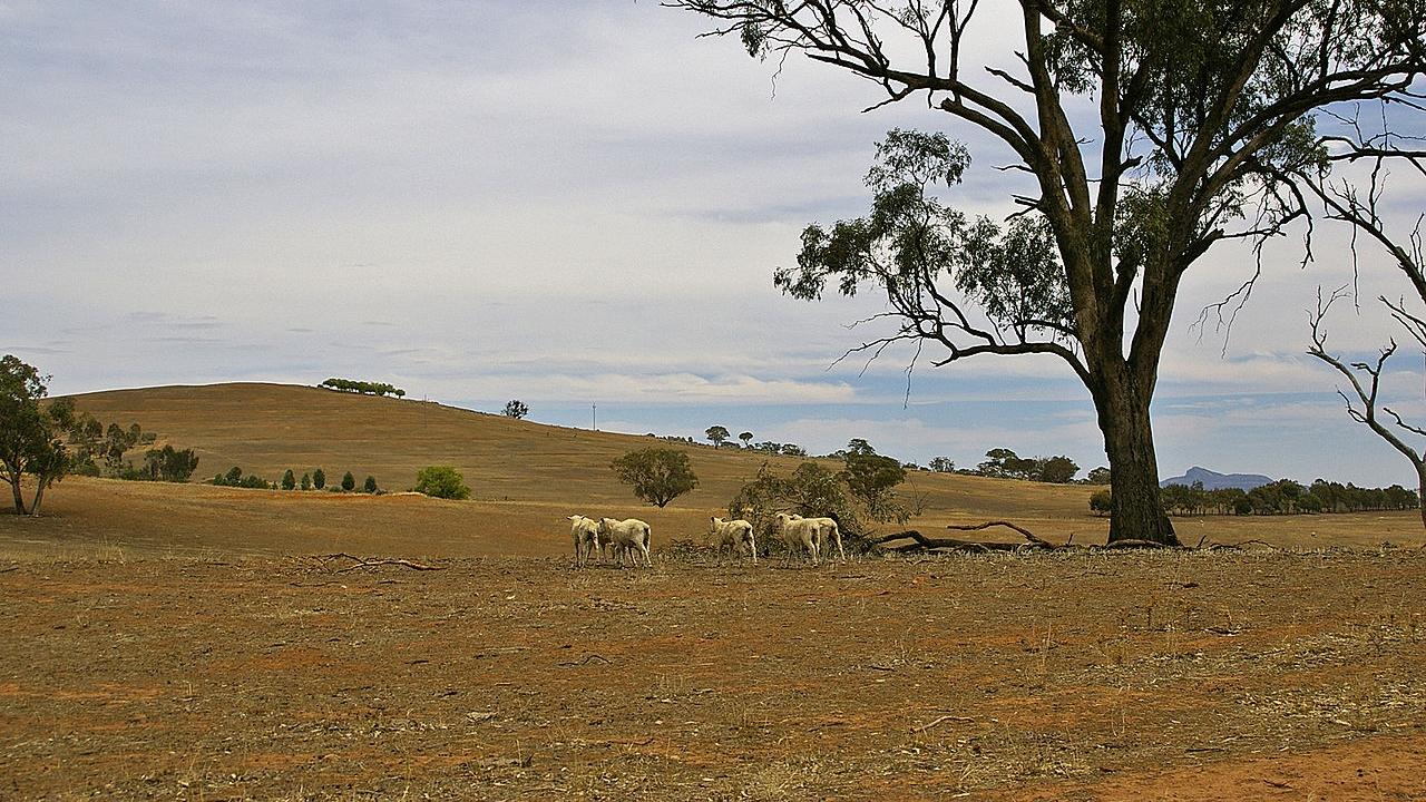 Susza. Fot. www.wikipedia.org / Bidgee