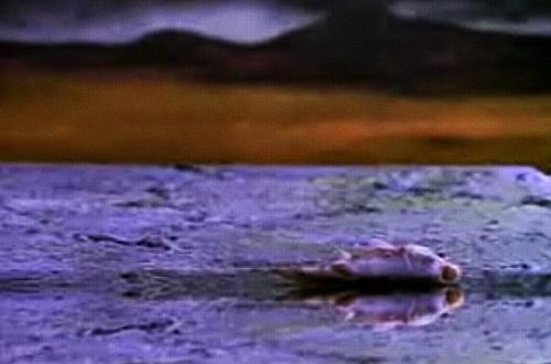 """Zdychająca złota rybka w teledysku do utworu """"Epic"""" to jedno z najbardziej znanych ujęć z klipów FNM. Fot. Internet"""