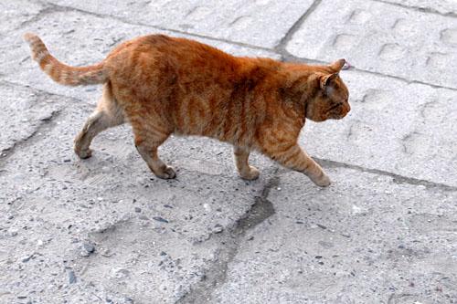 Gmina Szczecin poprosiła o zaopiniowanie projektu miejskiego programu opieki nad zwierzętami 50 organizacji prozwierzęcych. Odpowiedziały tylko trzy. Fot. Łukasz Szełemej [PR Szczecin/Archiwum]