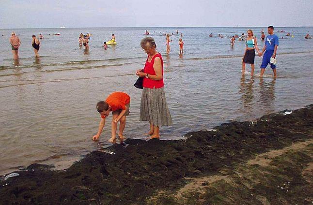 Tony wodorostów ze świnoujskiej plaży