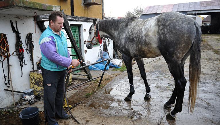 Awantura o konia w myjni samochodowej [DUŻO ZDJĘĆ, WIDEO]