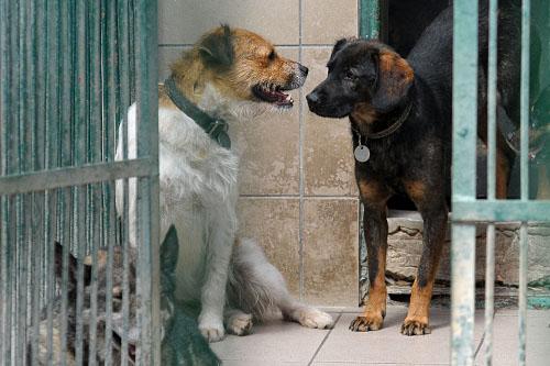 Bezdomni będą pomagać bezpańskim psom