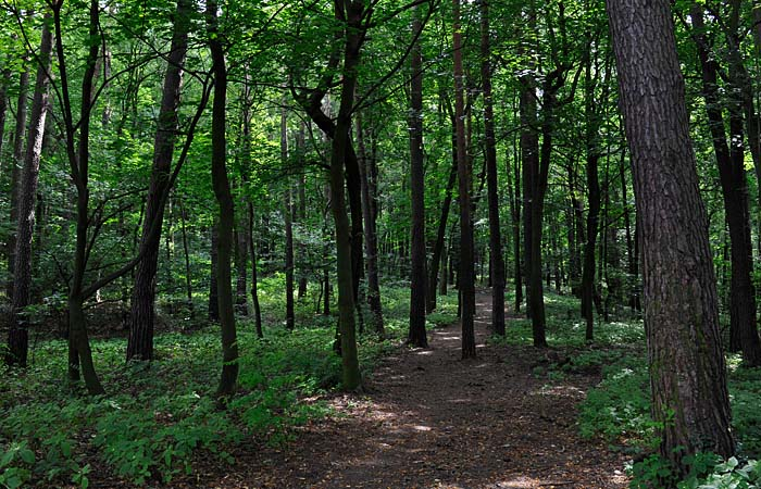 Będą nowe lasy w Zachodniopomorskiem. Ruszyła wielka akcja sadzenia drzew