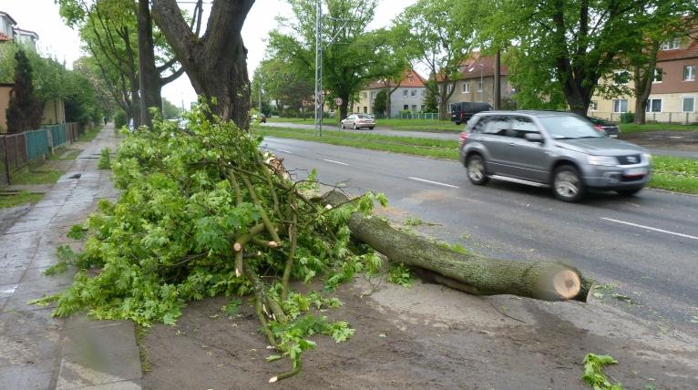 Na Ku Słońcu przewróciło się drzewo