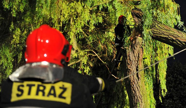 Wiatr powalił drzewo na Niebuszewie w Szczecinie. Spadło na samochody [ZDJĘCIA]