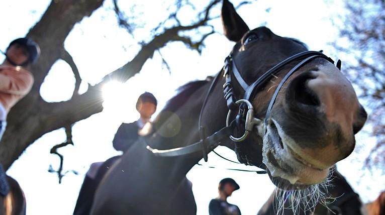 Atrakcje dla miłośników koni. Na miejscu będą kaskaderzy