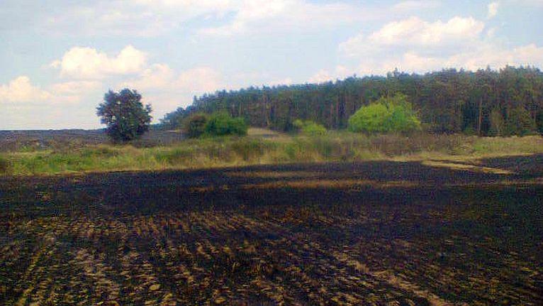 Strażacy powstrzymali pożar lasu [ZDJĘCIA]