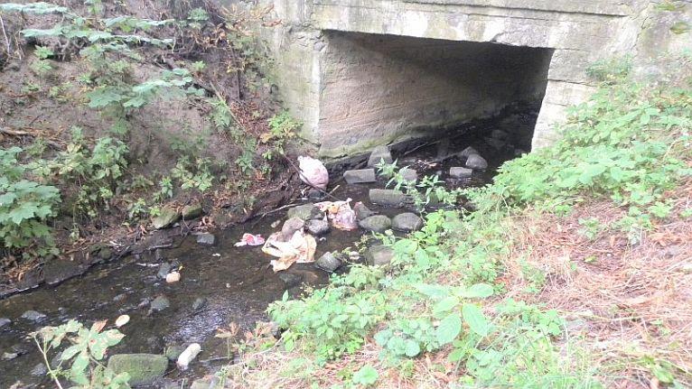 Kto wrzucił szczątki dzików do rzeki? Sprawę wyjaśnia policja