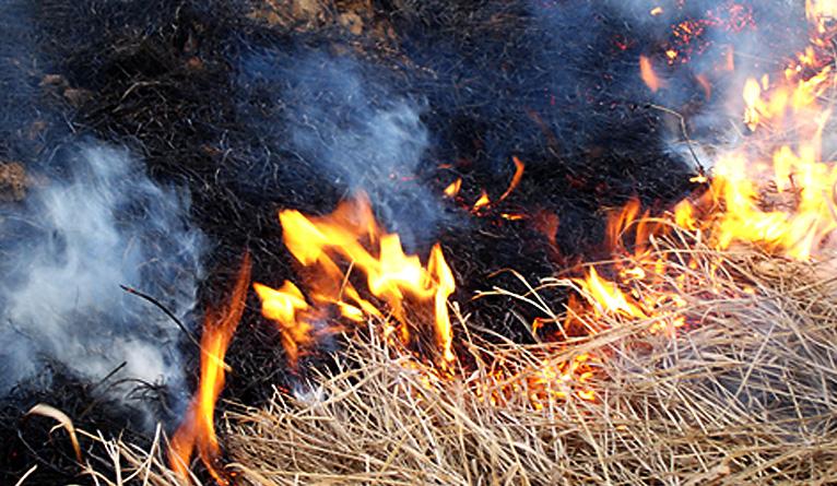 Płoną trawy w Zachodniopomorskiem