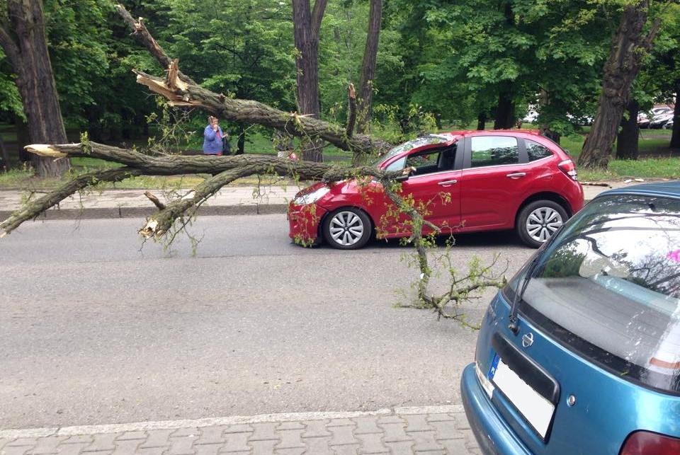 Drzewo przewróciło się na samochód