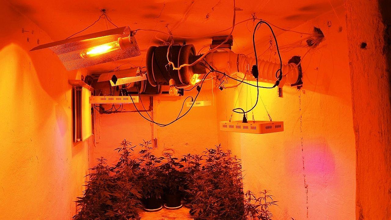 Plantacja konopi w domu jednorodzinnym